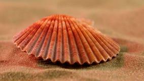 Coperture dell'oceano sulla sabbia, luce rosa, fine su stock footage
