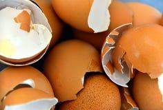 Coperture dell'uovo fotografie stock libere da diritti