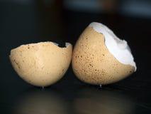 Coperture dell'uovo immagini stock libere da diritti