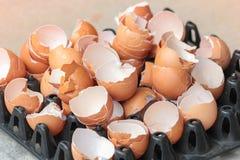 Coperture dell'uovo Immagini Stock