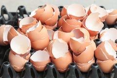 Coperture dell'uovo Fotografia Stock Libera da Diritti