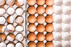 Coperture dell'uovo in scatola delle uova Immagini Stock Libere da Diritti