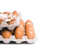Coperture dell'uovo in scatola delle uova Fotografia Stock