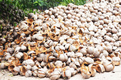 Coperture della noce di cocco Fotografia Stock Libera da Diritti