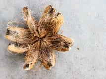 Coperture della noce di cocco Fotografia Stock