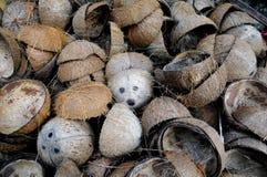 Coperture della noce di cocco. fotografia stock libera da diritti
