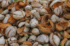 Coperture della noce di cocco in un mucchio nei tropici Fotografie Stock Libere da Diritti