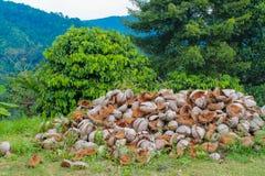 Coperture della noce di cocco in un mucchio nei tropici Immagine Stock