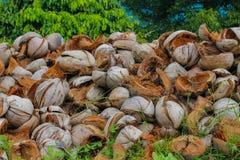 Coperture della noce di cocco in un mucchio nei tropici Fotografie Stock
