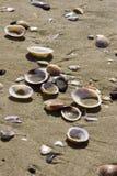 Coperture della spiaggia Fotografia Stock