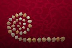 Coperture delle lumache Immagini Stock Libere da Diritti