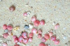 coperture delle lumache rosa del bottone sulla sabbia Immagini Stock Libere da Diritti