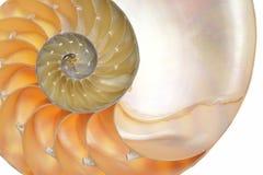 Coperture di nautilus fotografie stock