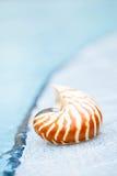 Coperture di nautilus al bordo della piscina della località di soggiorno Fotografia Stock