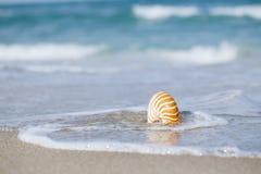 Coperture di nautilus con l'onda del mare, spiaggia di Florida nell'ambito del ligh del sole Fotografia Stock Libera da Diritti