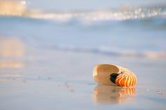 Coperture di nautilus su una sabbia della spiaggia dell'oceano del mare con le onde e la r dorate Fotografia Stock Libera da Diritti