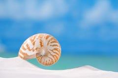 Coperture di nautilus sulla sabbia bianca della spiaggia e sul backgroun blu di vista sul mare Immagini Stock Libere da Diritti