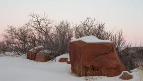 Coperture di neve la terra mentre i rami nudi raggiungono verso il cielo fotografia stock libera da diritti