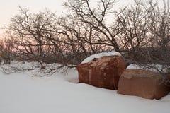 Coperture di neve la terra mentre sfreghi i rami nudi di portata dei cespugli della quercia verso il cielo immagini stock