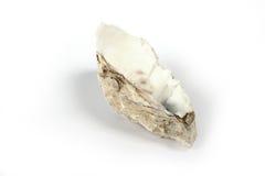 Coperture di ostrica mezze Fotografia Stock