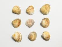 Coperture differenti su un fondo bianco Fotografia Stock