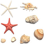 Coperture e collezioni delle stelle marine Immagini Stock Libere da Diritti