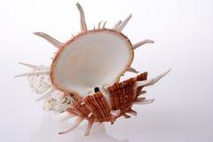 Coperture e corallo del mare immagine stock