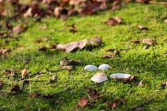 Coperture e foglie su muschio Immagine Stock
