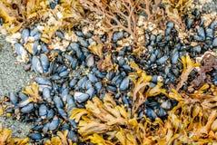 Coperture e foglie su una spiaggia Fotografia Stock Libera da Diritti