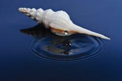 Coperture e Waterdrop del mare Fotografie Stock