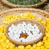 Coperture gialle del bozzolo del baco da seta tramite l'itinerario di seta Immagine Stock