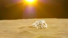 Coperture insolite dell'oceano, bianco, sulla sabbia, giallo della parte posteriore video d archivio