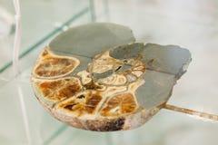 Coperture petrificate antiche reali della pietra a spirale fossile della lumaca Pietre fossili in museo fotografia stock libera da diritti