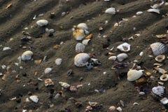 Coperture in spiaggia di bassa marea Fotografia Stock