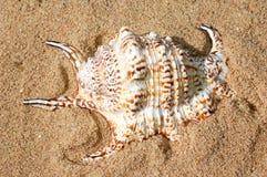 Coperture sulla sabbia Immagini Stock Libere da Diritti