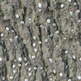 Coperture sulla sabbia bagnata Fotografie Stock Libere da Diritti