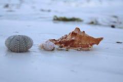 Coperture sulla spiaggia fotografie stock
