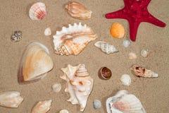 Coperture variopinte dei molluschi marini sulla sabbia del mar Giallo Fotografie Stock