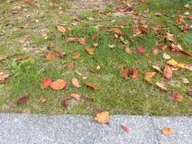 Copi lo spazio per testo sul pavimento dell'erba verde Fotografia Stock