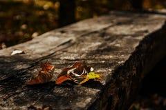 Copie d'automne Portrait de la vie immobile photos libres de droits
