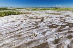 Copie de gage sur le sable de mer sec à marée basse photographie stock