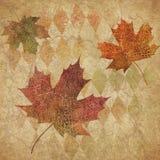 Copie de harlequin de vintage et Autumn Leaves Background - papier affligé Scrapbooking Image libre de droits