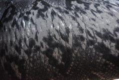 copie du serpent 3D, fond et coloration de python sur la base de tissu, fond abstrait image libre de droits