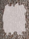 Copie o espaço com uma beira da casca de árvore Foto de Stock
