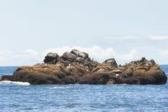 Copie o espaço dos selos e dos pássaros em rochas intertidal foto de stock