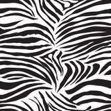 Copie sans couture animale de vecteur de zèbre noir et blanc Photo libre de droits
