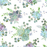 Copie sans couture succulente colorée verte de conception de vecteur d'Echeveria Image libre de droits