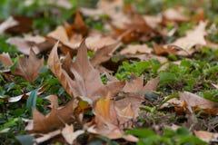 Copie typique d'automne Feuilles sèches sur la terre verte photographie stock libre de droits