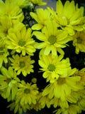 Copies color?es de beaux-arts de macro papier peint de fond de fleur de chrysanth?me images stock