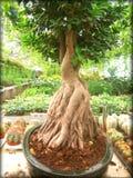Copies de beaux-arts de papier peint de fond d'arbre de bonsaïs images stock